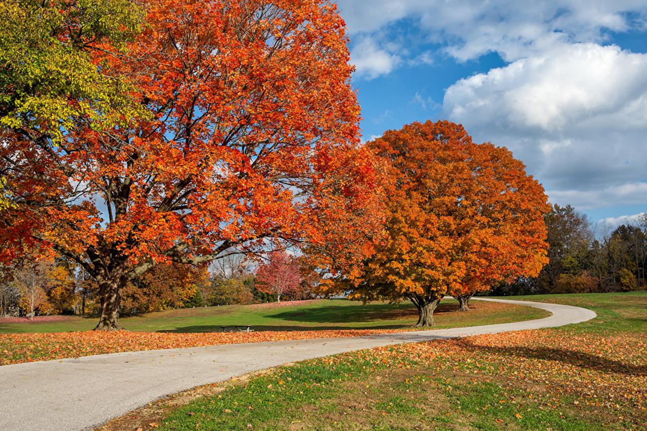 Фотографии США Листва Arrow Rock State Park Missouri Природа осенние парк Дороги дерево лист штаты Листья америка Осень Парки дерева Деревья деревьев