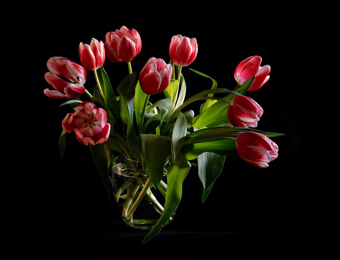 Картинки Букеты тюльпан Красный цветок Черный фон букет красные красная красных Тюльпаны Цветы на черном фоне