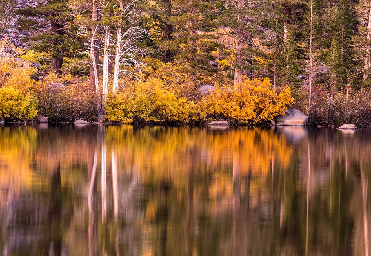 Картинка Калифорния америка Mammoth Lakes Осень Природа Леса Озеро Камни кустов калифорнии США штаты осенние лес Камень Кусты