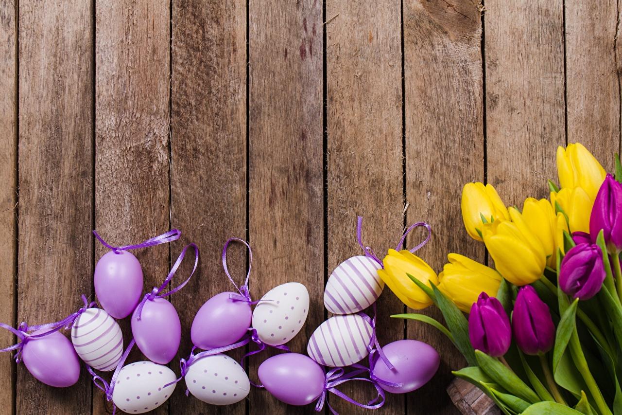 Фото Пасха яйцами тюльпан цветок Доски яиц яйцо Яйца Тюльпаны Цветы