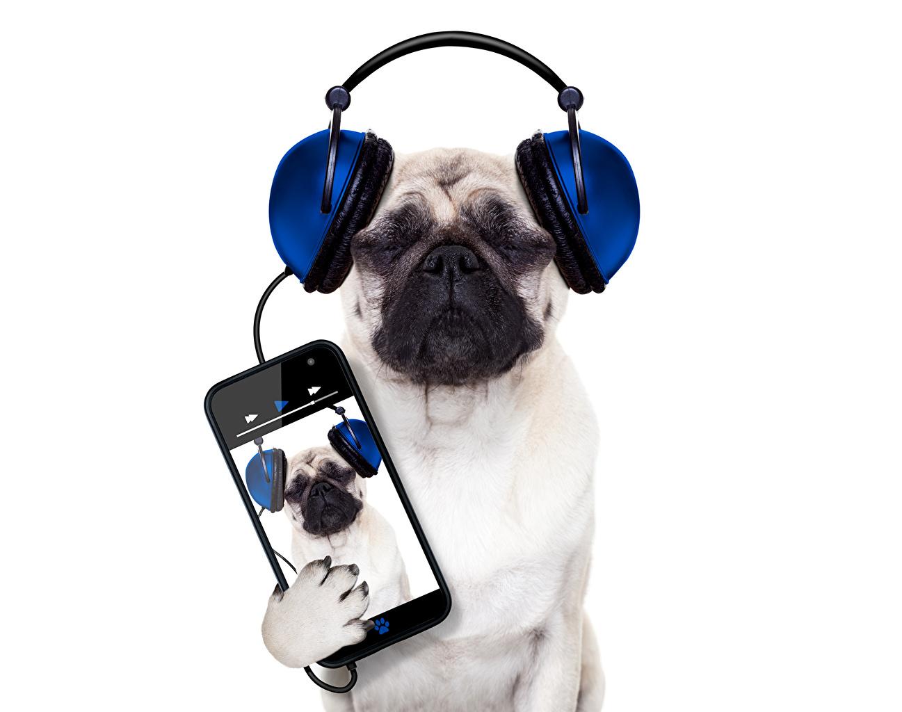 Обои На Телефон Животные Собаки