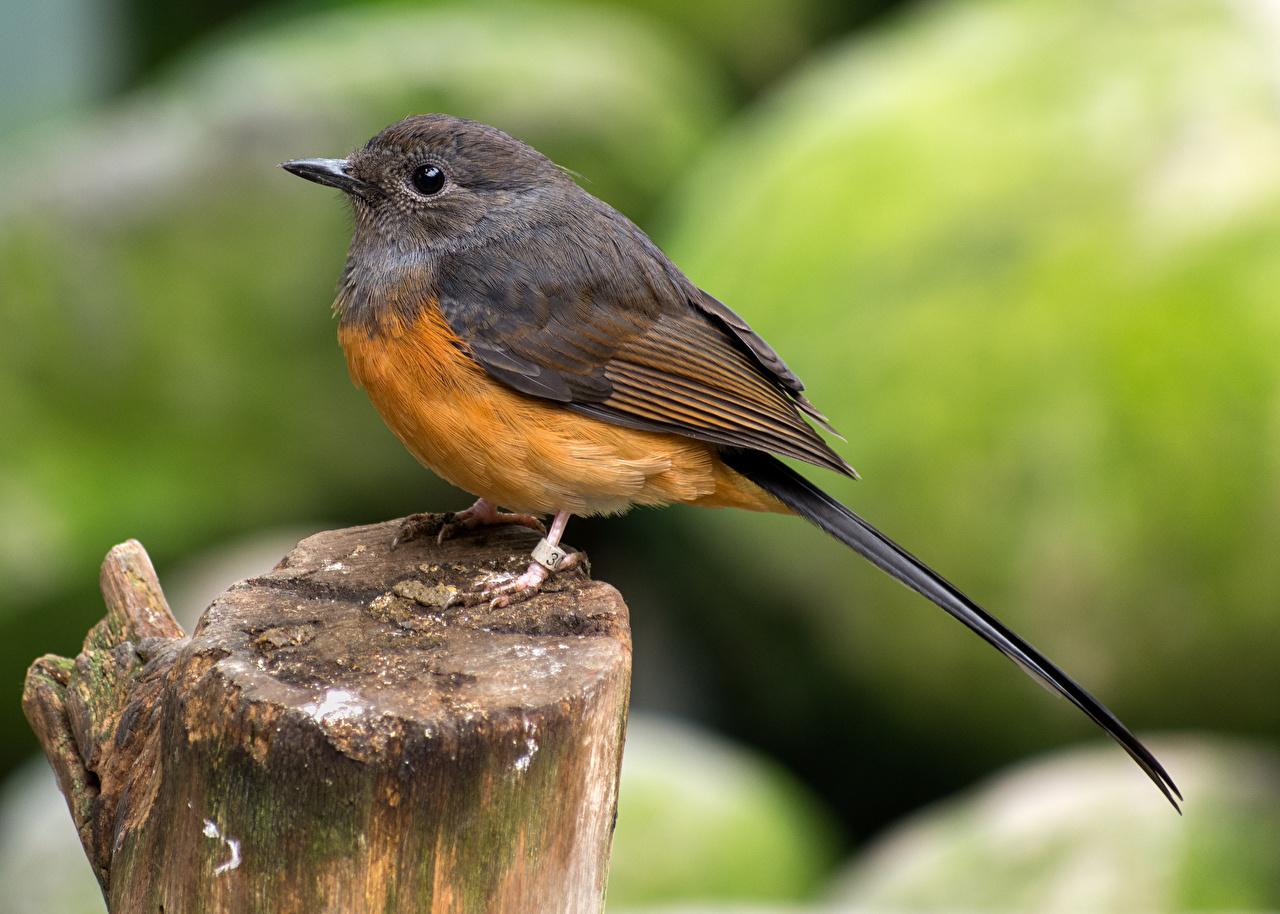 Картинки Птицы боке Пень вблизи Животные птица Размытый фон пне животное Крупным планом