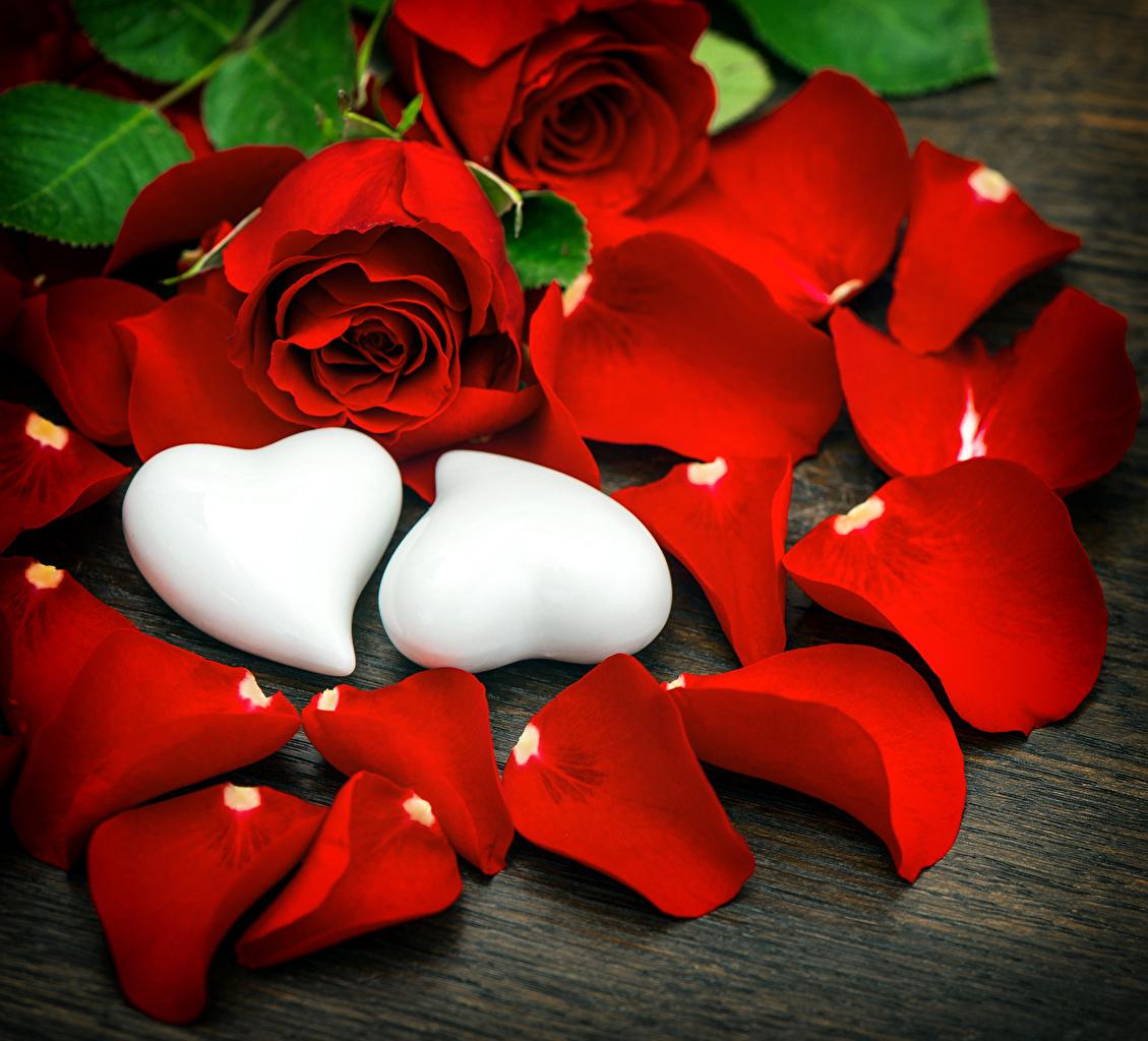 Фото серце 2 роза красных Лепестки Цветы Сердце сердца сердечко две два Розы Двое вдвоем красная красные Красный лепестков цветок
