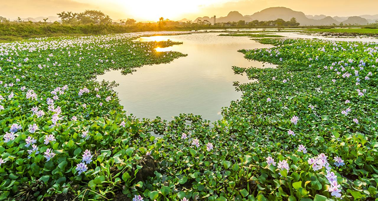 Картинка Вьетнам Природа Пруд Цветы Водяные лилии Рассветы и закаты Много Кувшинки