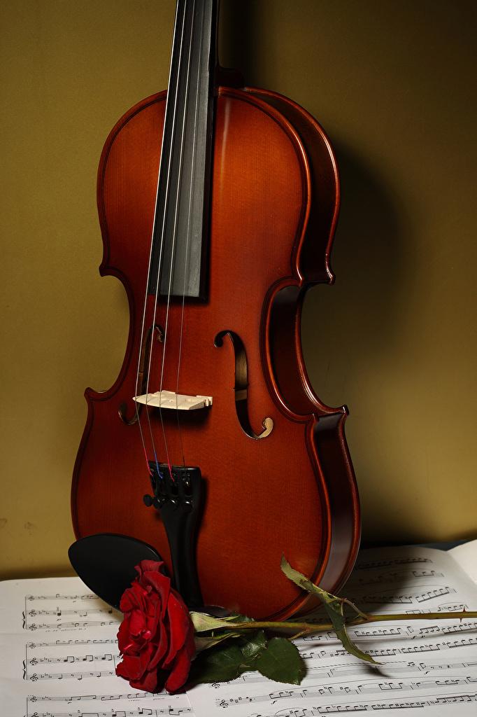 Фотографии скрипка Ноты роза Цветы  для мобильного телефона Скрипки Розы цветок