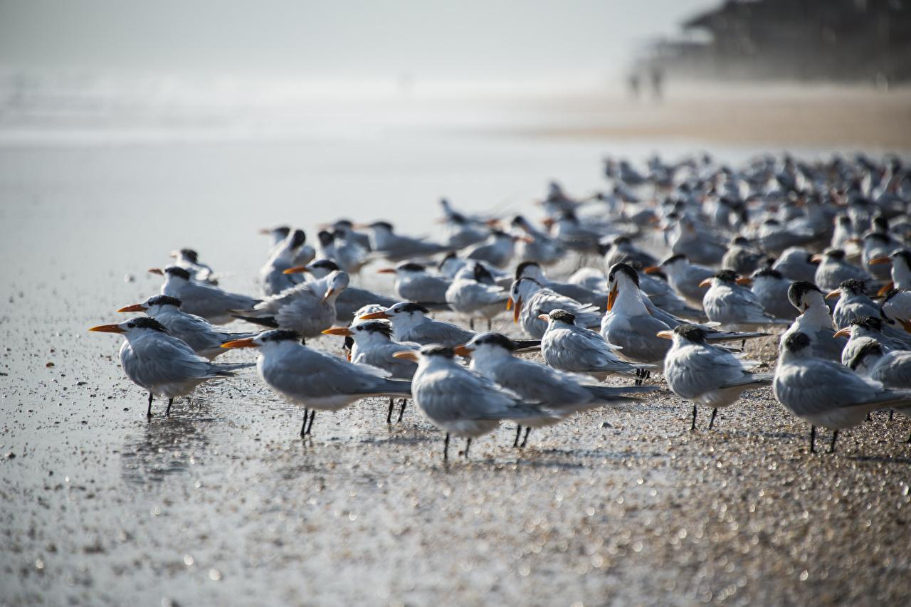 Фотография Птицы Чайка Много животное птица чайки Животные