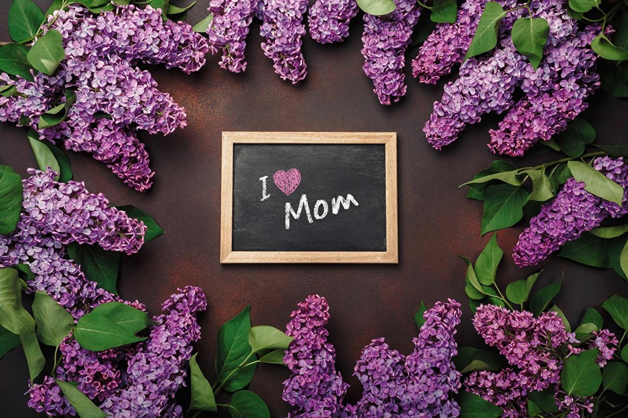 Фотография День матери Английский Цветы текст Сирень английская инглийские слова цветок Слово - Надпись