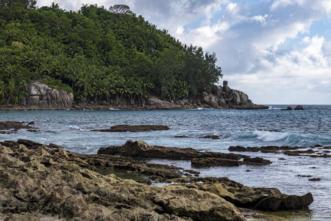 Обои Petite Police Beach Seychelles Утес Природа Леса Тропики берег Скала Побережье