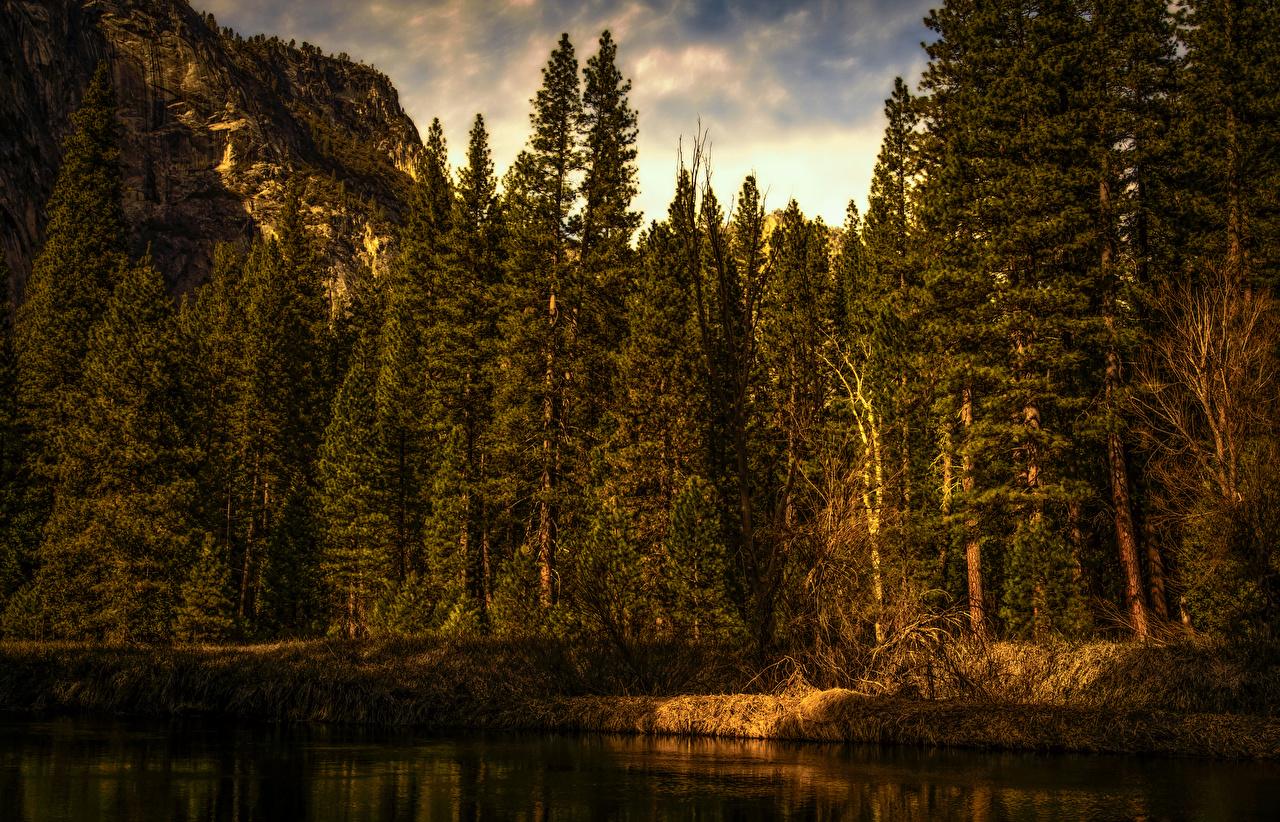 Картинка Йосемити США Ель Природа Леса Парки берег штаты Побережье