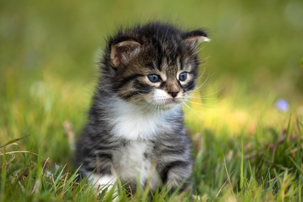 Фотография котенок кошка Размытый фон Трава Животные котят Котята котенка кот коты Кошки боке траве животное