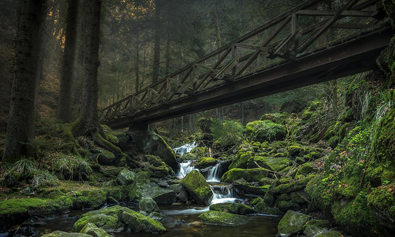 Картинка Германия Ravennaschlucht ручеек Природа Водопады Леса мха Камень Ручей Мох мхом Камни