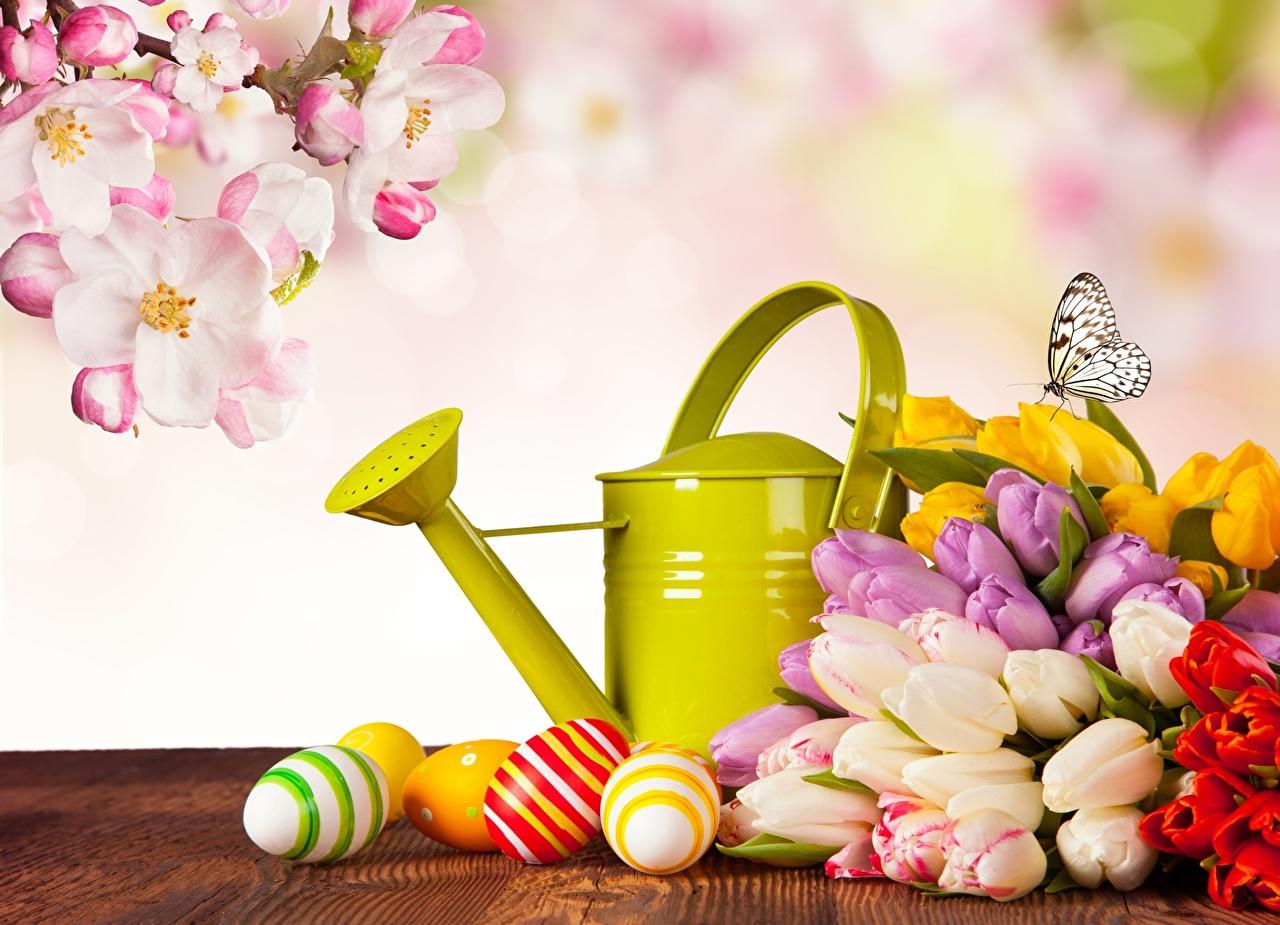 Фотография Пасха Бабочки Яйца тюльпан Цветы Праздники Цветущие деревья бабочка яиц яйцо яйцами Тюльпаны цветок