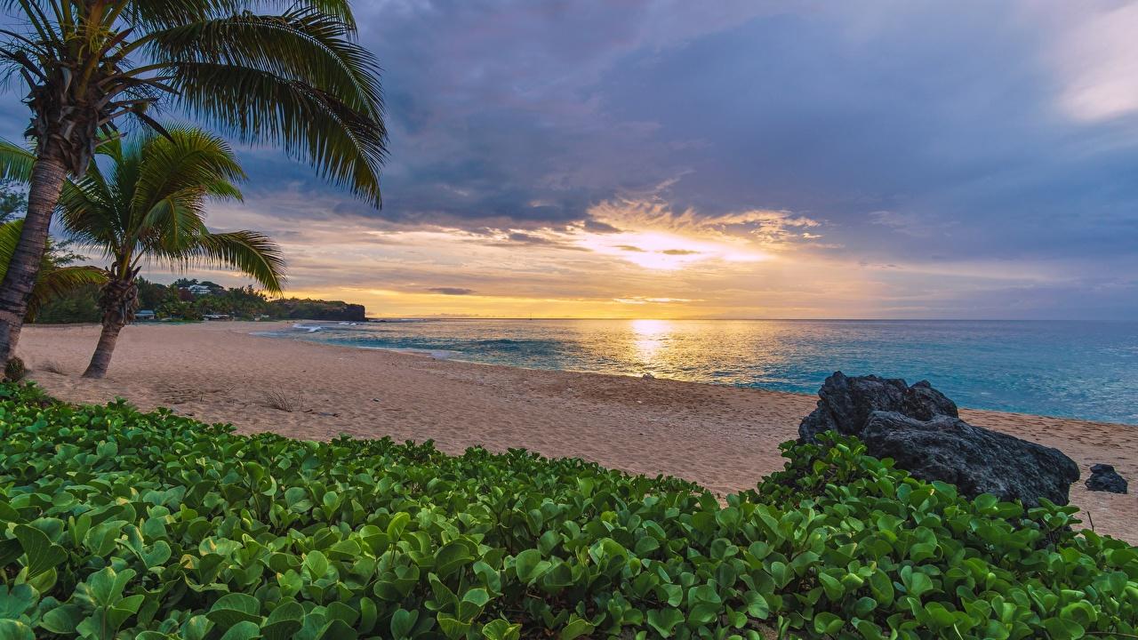 Фото Reunion, Indian ocean Пляж Природа Пальмы Тропики Рассветы и закаты берег Побережье