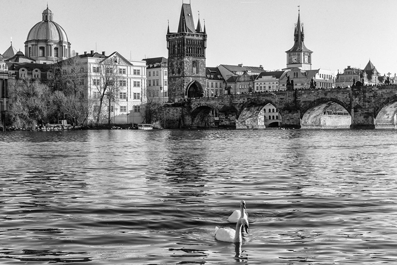 Картинка Города Прага Чехия Karluv мост воде река Карлов мост город Мосты Вода Реки речка