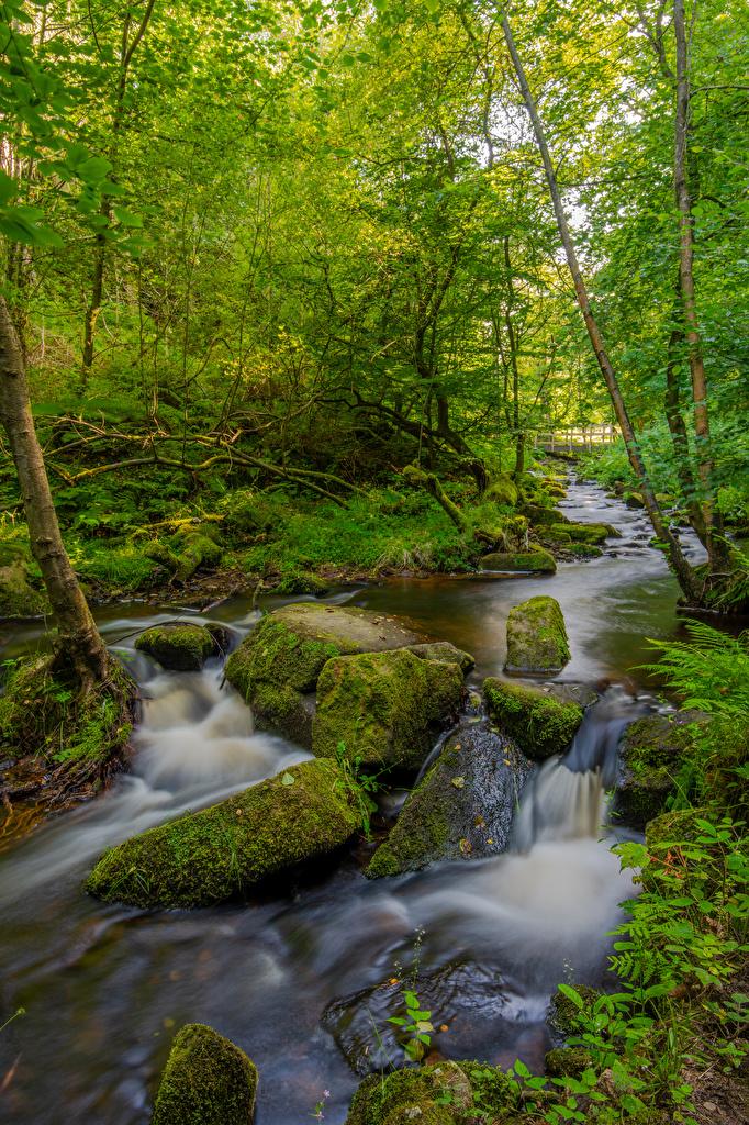 Картинки Англия Peak District Ручей Природа Леса мхом Камень дерево  для мобильного телефона ручеек лес Мох мха Камни дерева Деревья деревьев