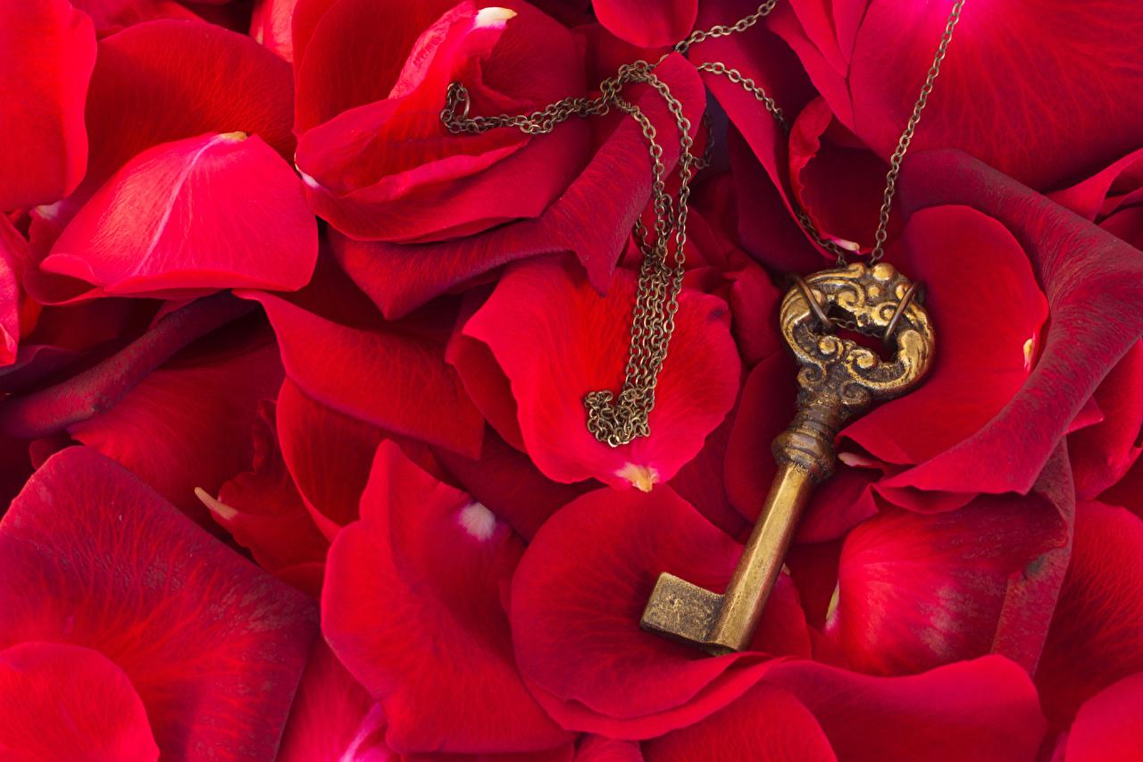 Картинка День всех влюблённых красные лепестков ключом День святого Валентина красных Красный красная Лепестки ключа Замковый ключ