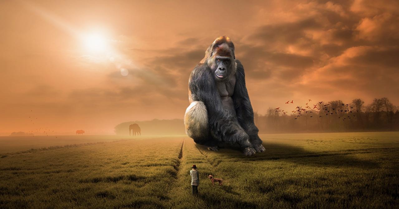Фотография Обезьяны Фантастика Поля Сидит Трава Животные Фэнтези сидящие