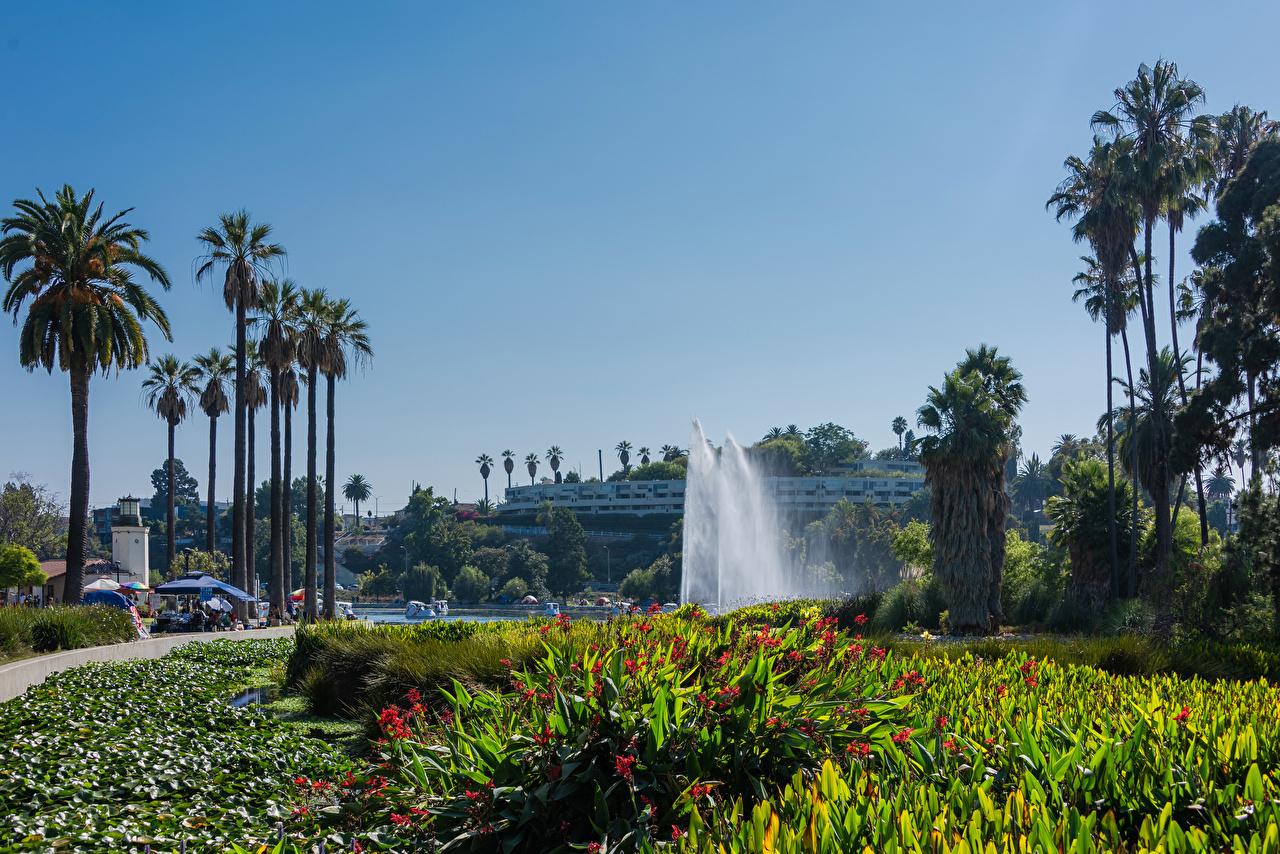 Фото Лос-Анджелес США Фонтаны Echo Park Lake Природа парк пальм штаты америка Парки пальма Пальмы