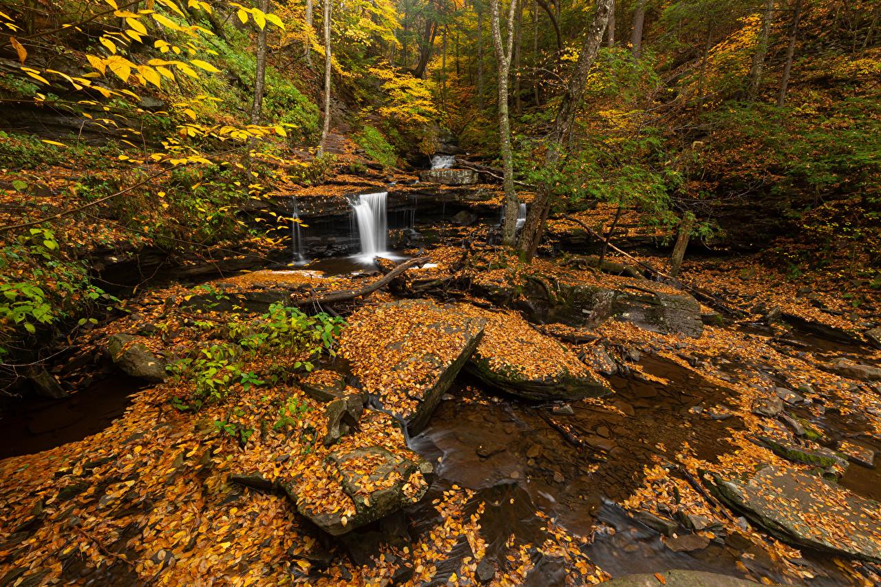 Обои для рабочего стола США лист Ricketts Glen осенние Природа Водопады парк штаты Листва Листья америка Осень Парки
