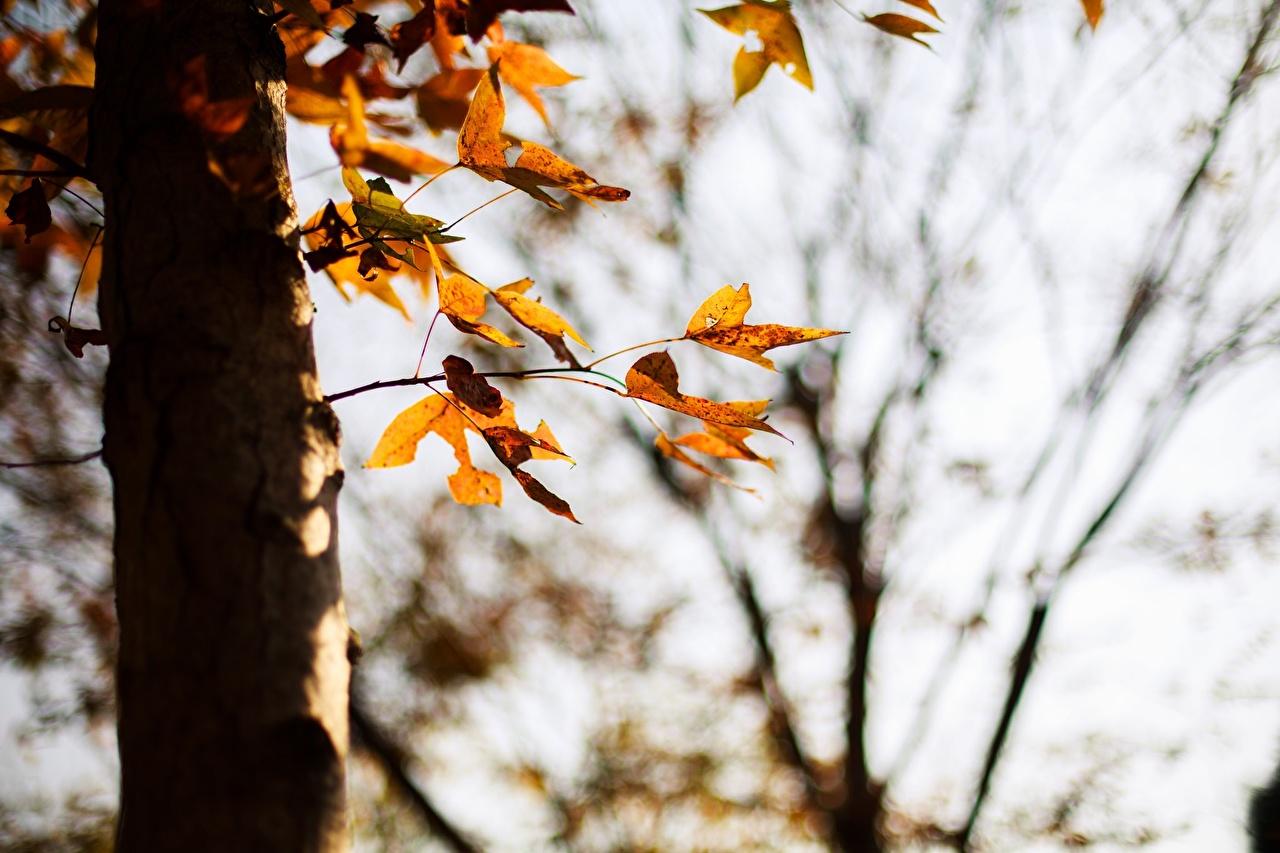 Фото Листья осенние Природа Ствол дерева сезон года лист Листва Осень Времена года