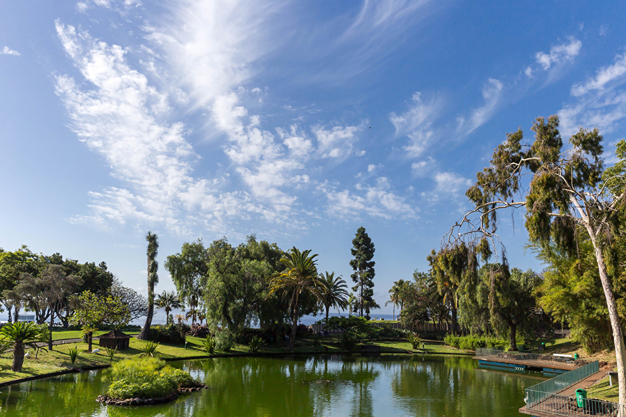 Фотография Португалия Santa Catarina Park in Funchal Madeira Природа Пруд Парки забором дерево парк Забор ограда забора дерева Деревья деревьев