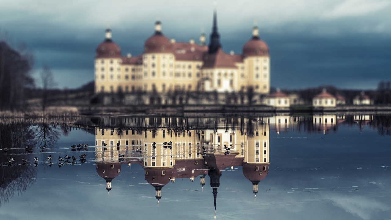 Фото Птицы Германия Moritzburg Castle, Saxony замок Отражение город птица Замки отражении отражается Города
