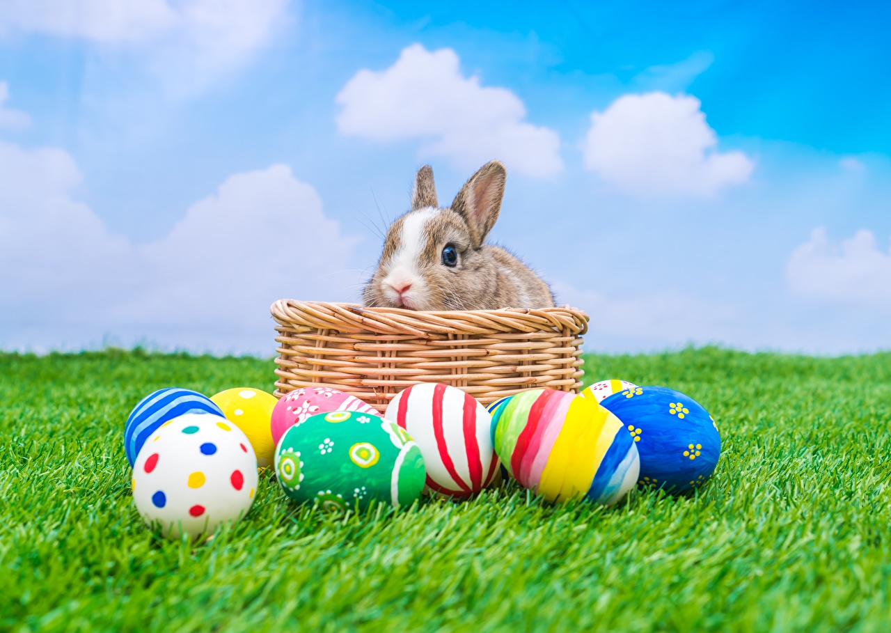 Фотографии Пасха Кролики яйцами Корзина траве Животные кролик яиц яйцо Яйца корзины Корзинка Трава животное