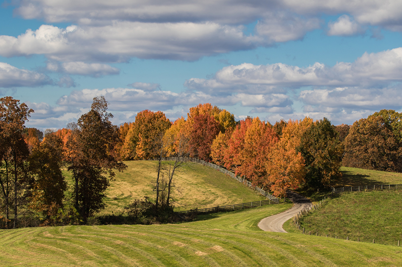 Фото Осень Природа Луга дерево осенние дерева Деревья деревьев