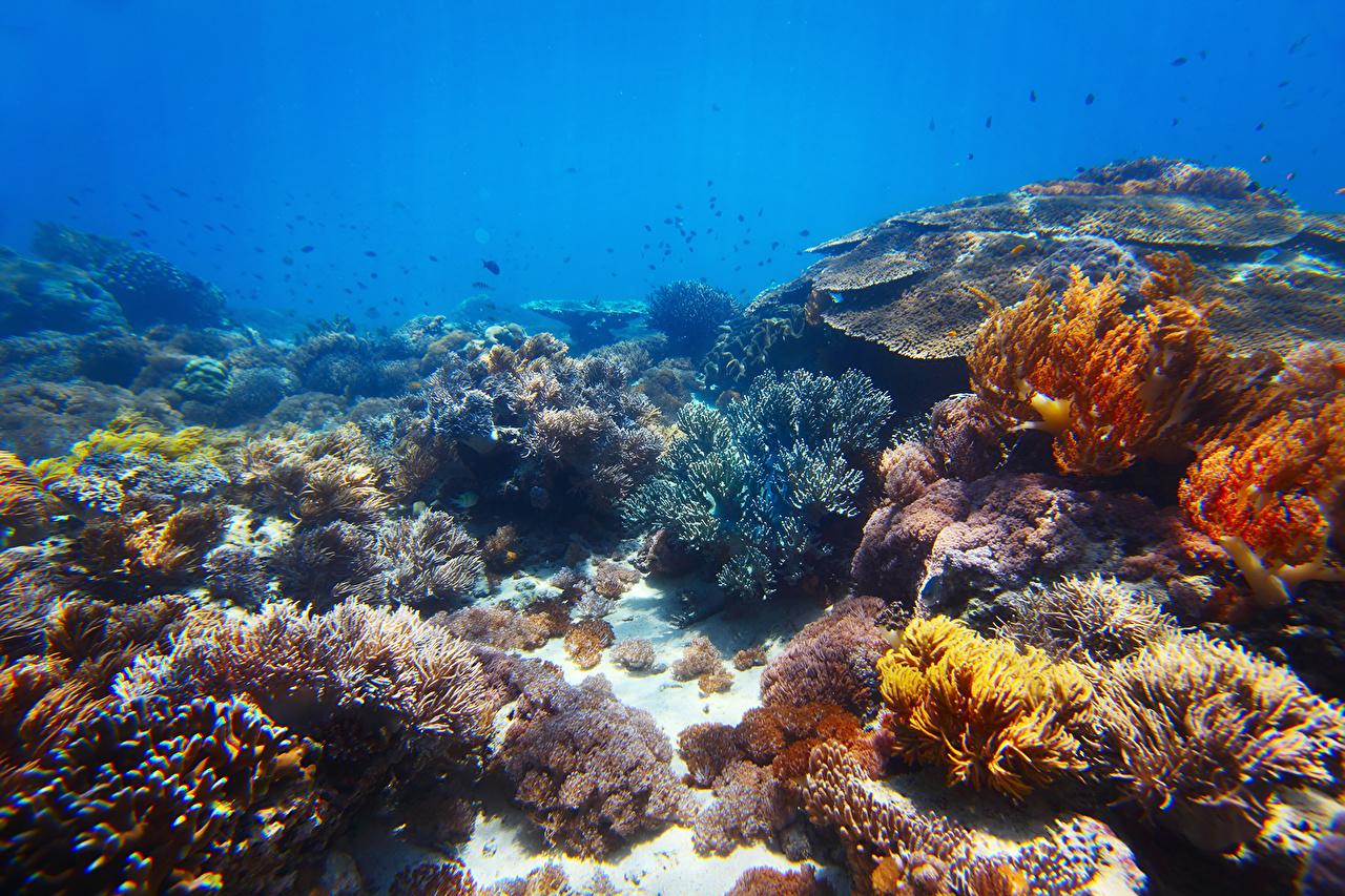 Фотография Подводный мир Кораллы животное Животные