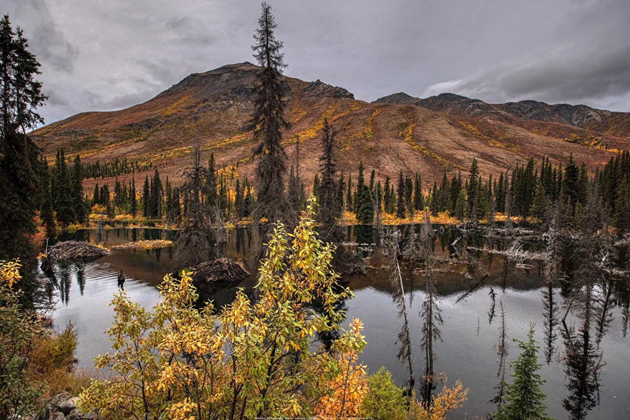 Фото Банф Канада ели Горы осенние Природа Парки Озеро Ель гора Осень парк