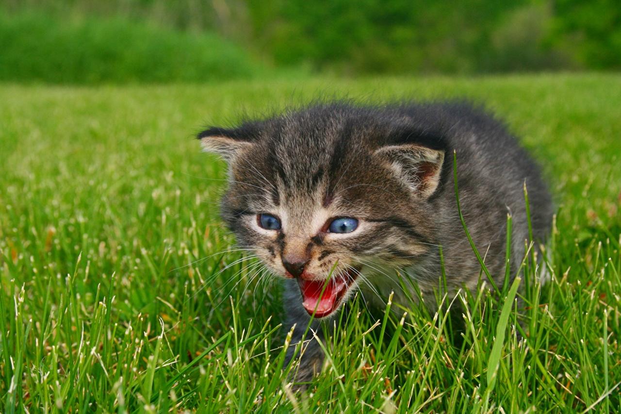 Фотография котят Кошки Трава животное Котята котенок котенка кот коты кошка траве Животные