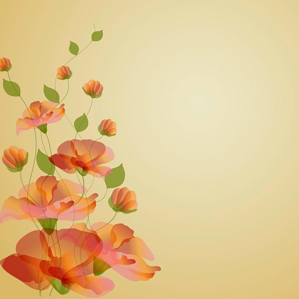 Картинки мак цветок Шаблон поздравительной открытки Рисованные Маки Цветы