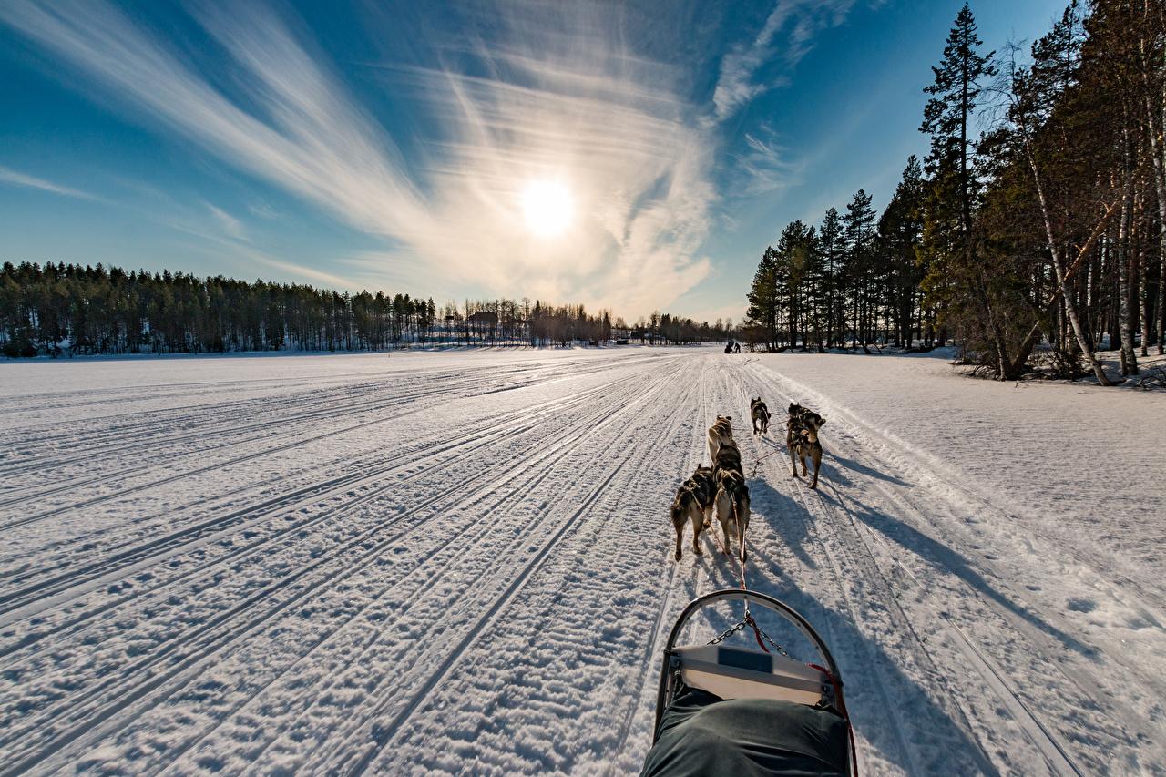 Фотографии Собаки Финляндия Northern Ostrobothnia зимние Природа Снег Дороги Рассветы и закаты Зима
