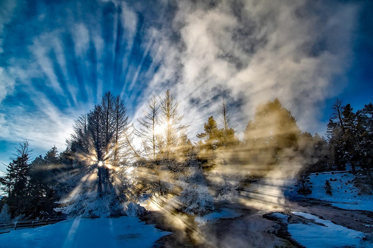 Картинка Лучи света Йеллоустон США тумане Зима Природа Снег Парки деревьев штаты Туман тумана зимние снеге снегу снега дерево дерева Деревья