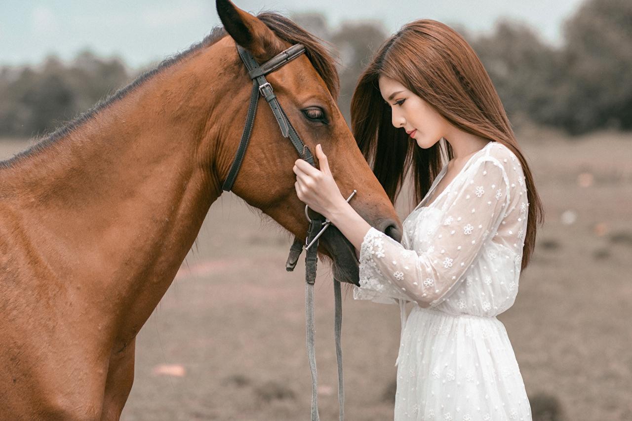 Фото Лошади шатенки молодая женщина Азиаты лошадь Шатенка девушка Девушки молодые женщины