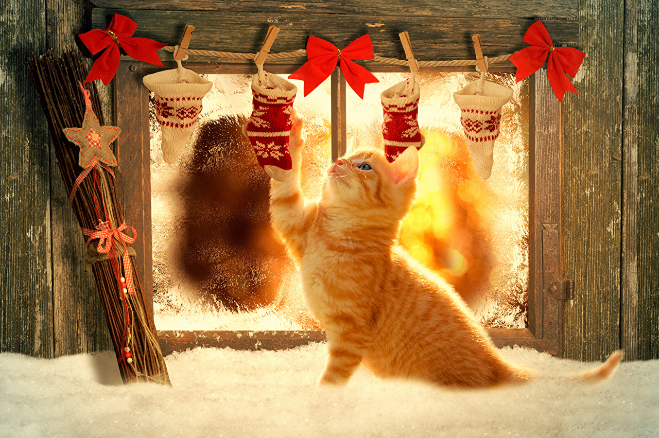 https://s1.1zoom.ru/big0/683/Cats_Holidays_Christmas_466542.jpg