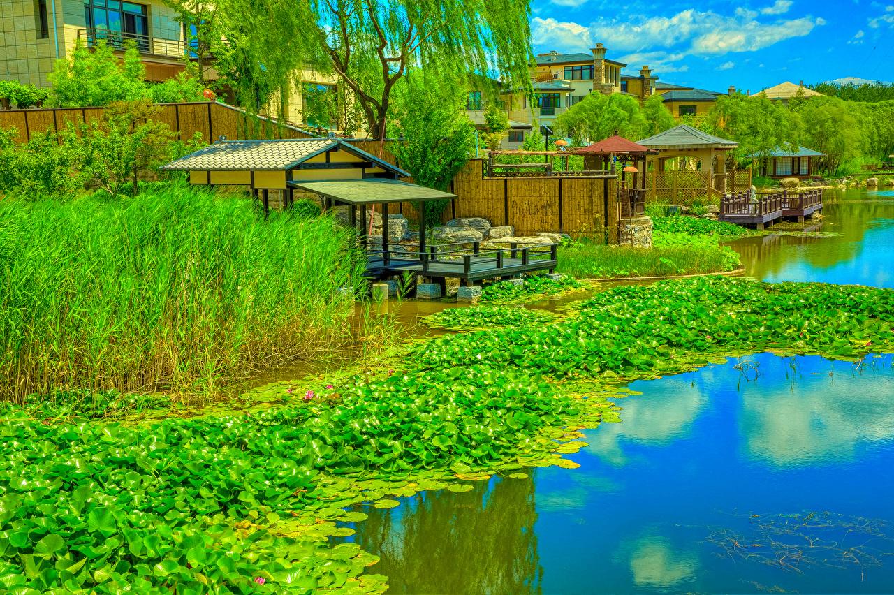 Фото Китай Beijing Zen Garden HDR Природа парк Водяные лилии речка Пристань HDRI Парки Кувшинки Реки река Пирсы Причалы
