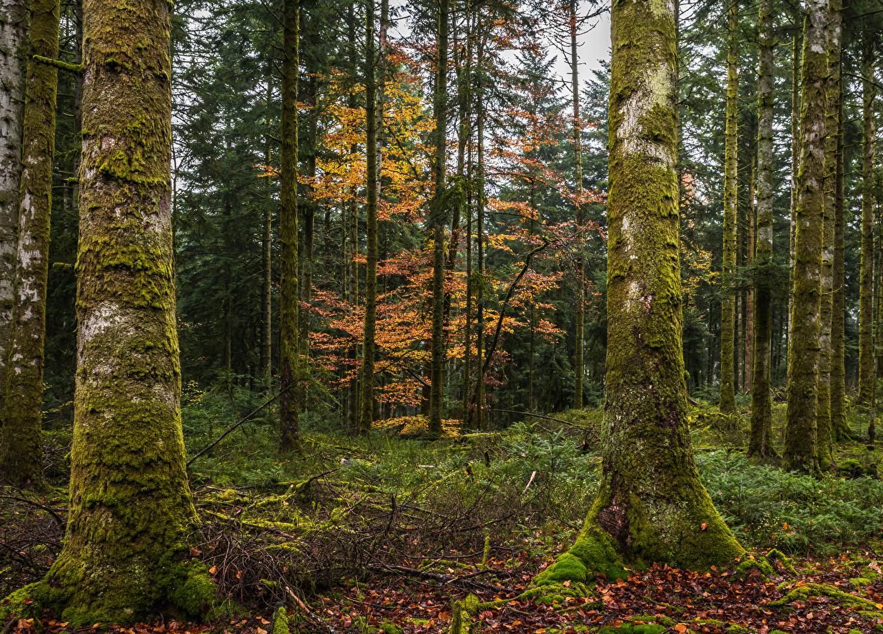 Обои для рабочего стола Листва осенние Природа лес Ствол дерева мха дерево лист Листья Осень Леса Мох мхом дерева Деревья деревьев