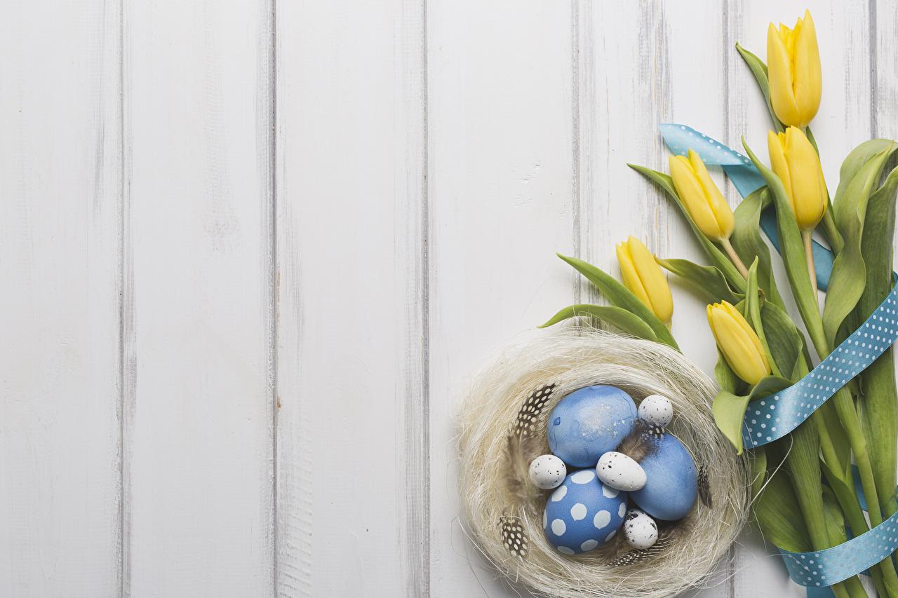 Обои для рабочего стола Пасха яйцо гнезда Тюльпаны Перья цветок ленточка Доски яиц Яйца яйцами гнезде Гнездо тюльпан Цветы Лента