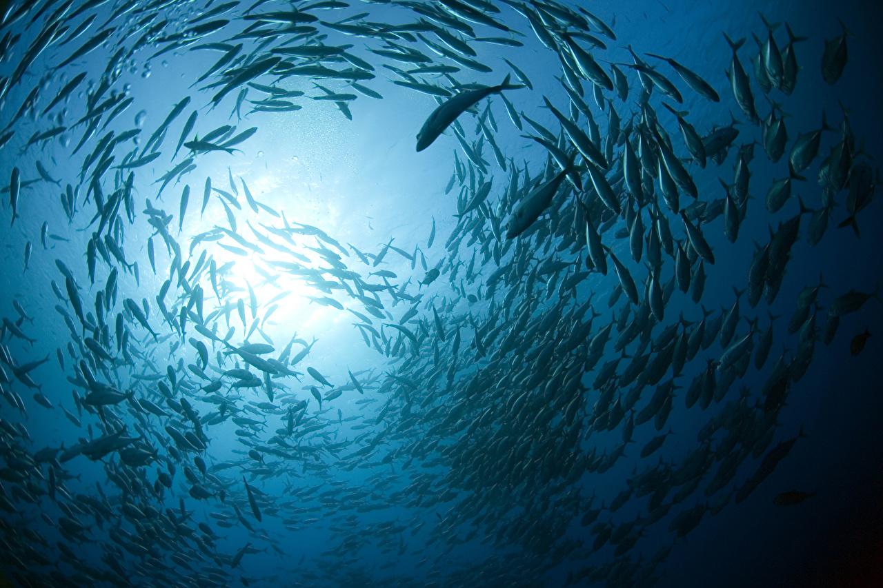 Фотография Рыбы Подводный мир Много животное Животные