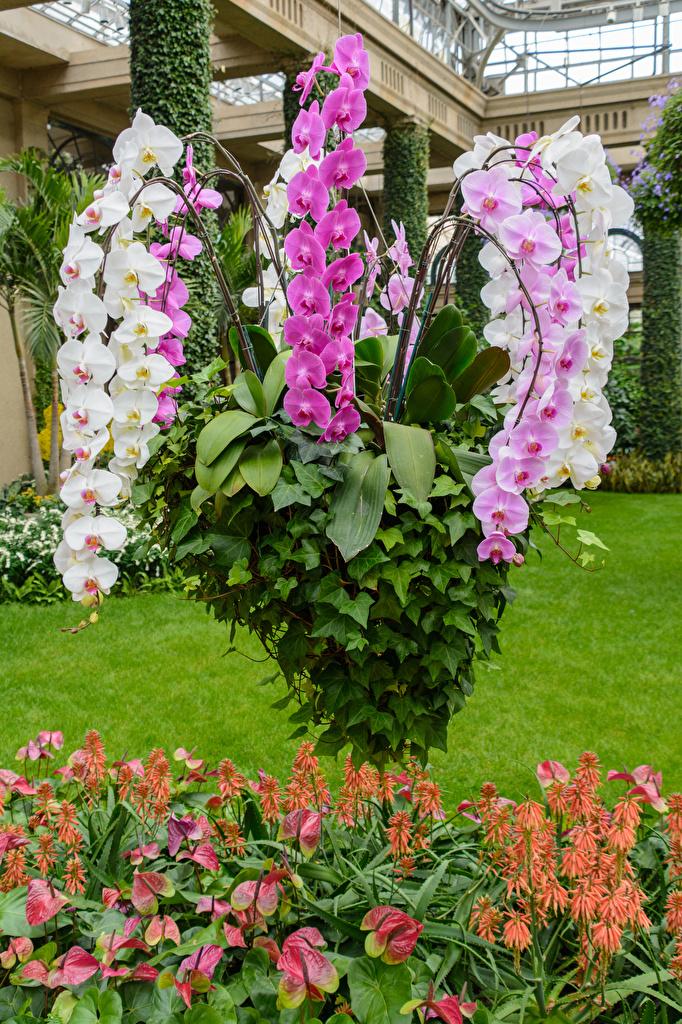 Фотографии орхидея цветок  для мобильного телефона Орхидеи Цветы