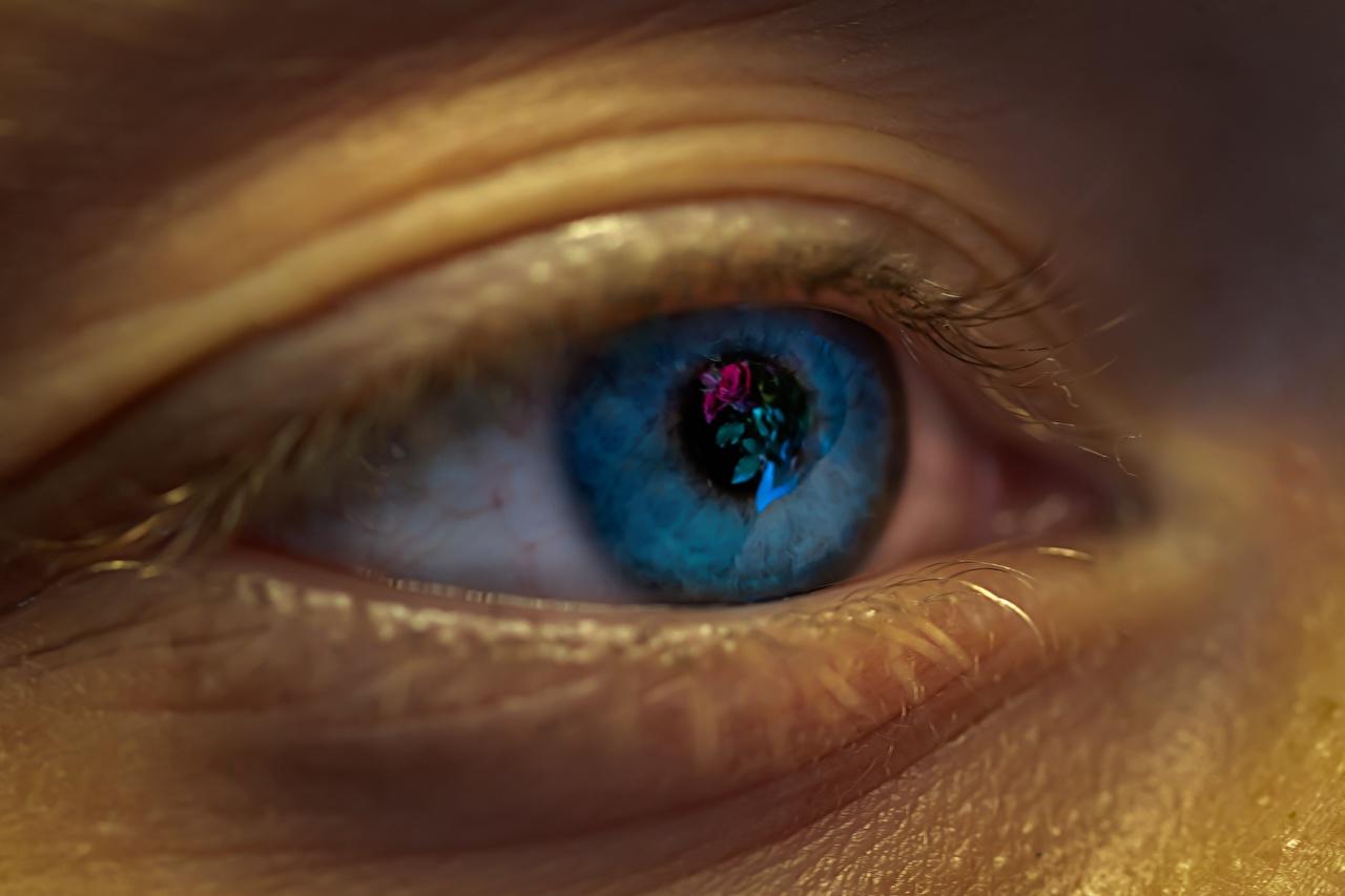 Фотография Глаза вблизи Крупным планом