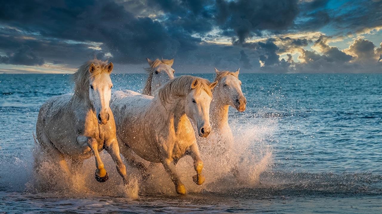 Обои для рабочего стола Лошади бежит Четыре 4 Брызги Вода Животные лошадь Бег бегущая бегущий с брызгами воде животное