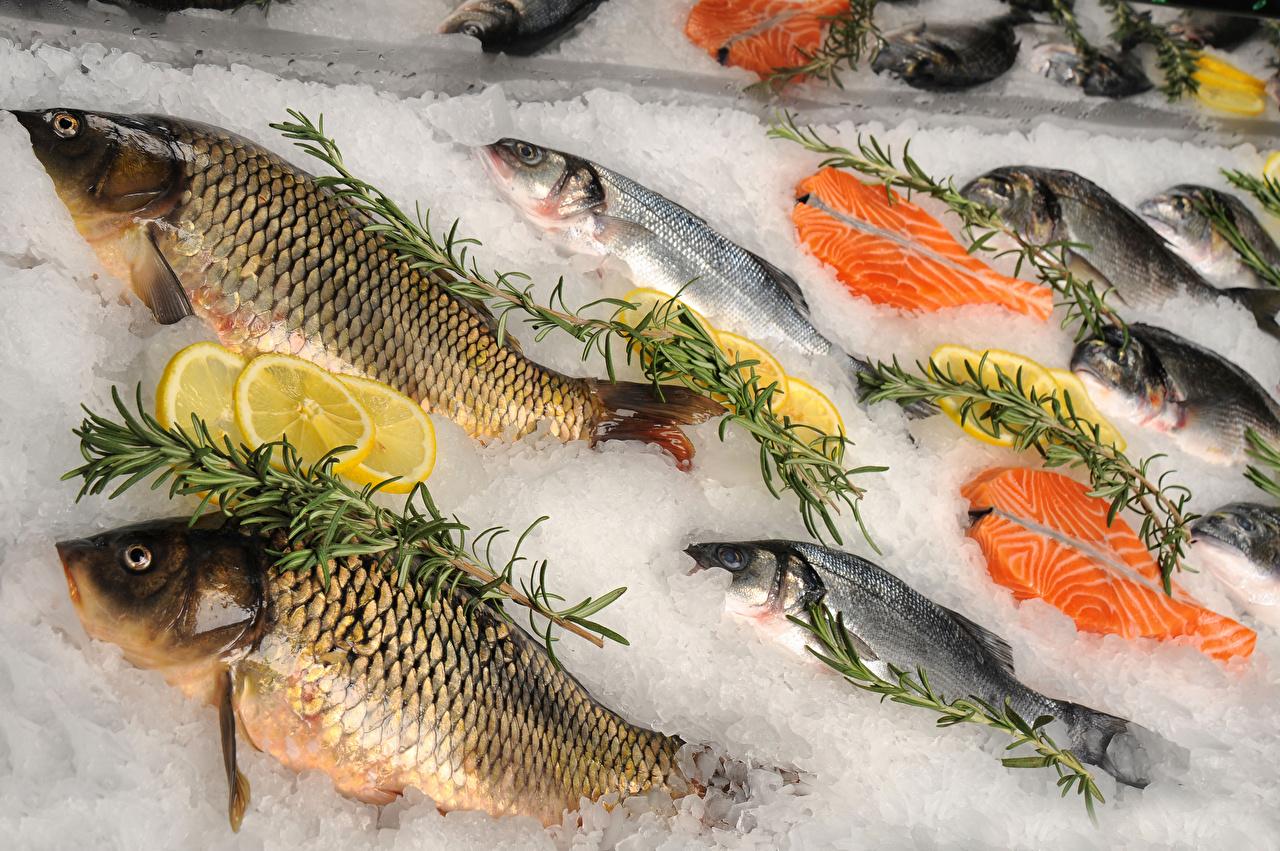 Обои для рабочего стола Лед Рыба Еда льда Пища Продукты питания
