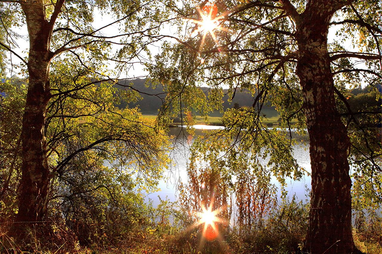 Обои для рабочего стола Германия Boos Березы Природа Пейзаж Ствол дерева Ветки береза ветвь ветка на ветке