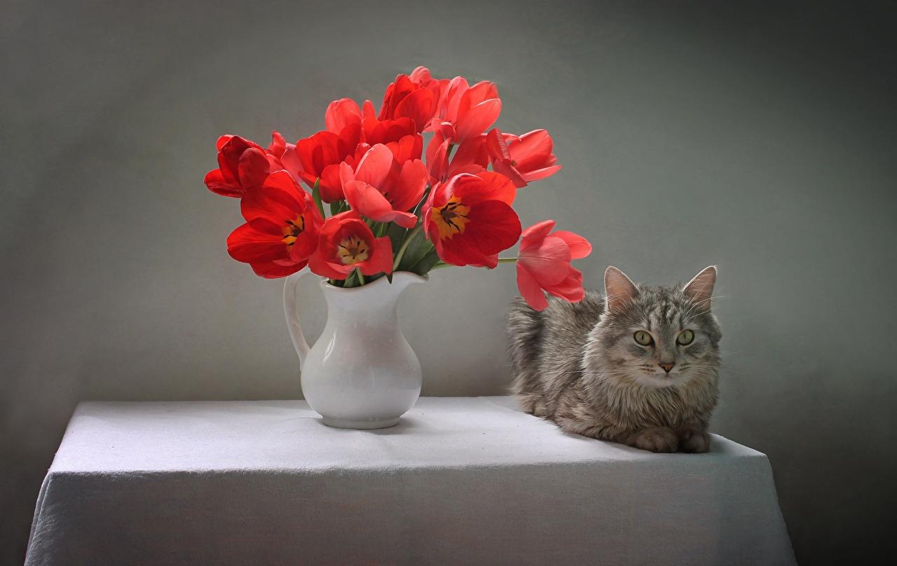 Фотографии Кошки букет Тюльпаны Цветы Ваза столы смотрит Животные кот коты кошка Букеты тюльпан цветок Стол вазы вазе стола Взгляд смотрят животное