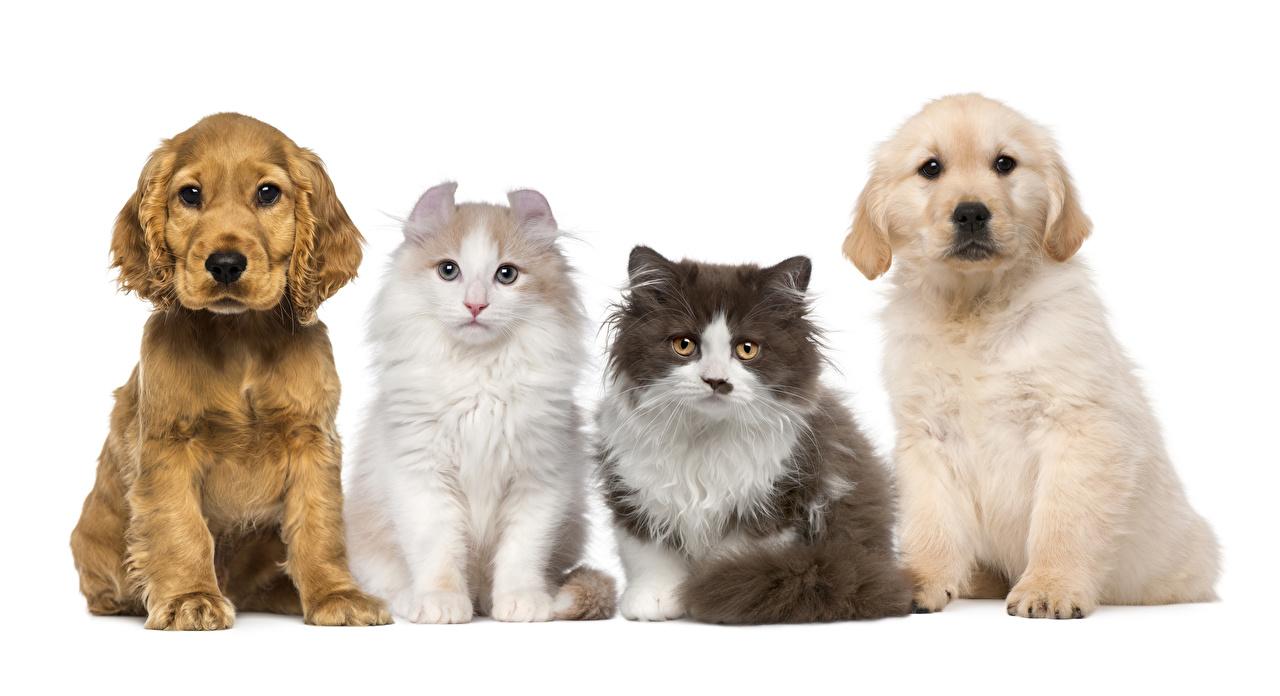 Картинки щенка Кошки собака животное Белый фон щенки Щенок щенков кот коты кошка Собаки Животные белом фоне белым фоном
