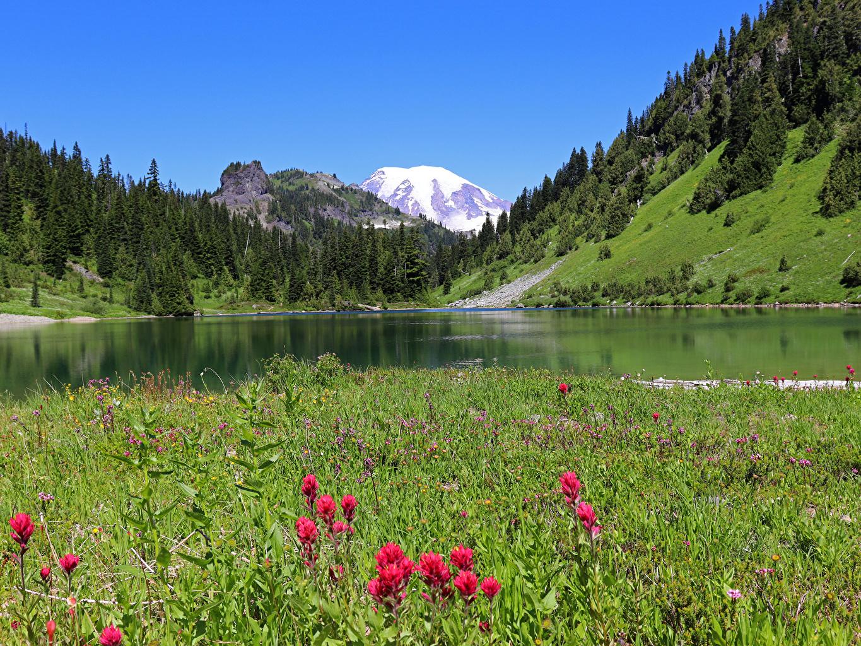 Картинки Вашингтон штаты Gifford Pinchot National Forest гора Природа лес Озеро Трава США америка Горы Леса траве