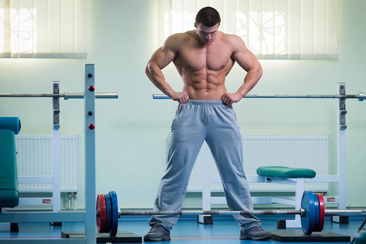 Картинки Мышцы мужчина спортзале Спорт штангой Живот Мужчины мускулы Спортзал спортивный зал Штанга спортивные спортивная спортивный живота