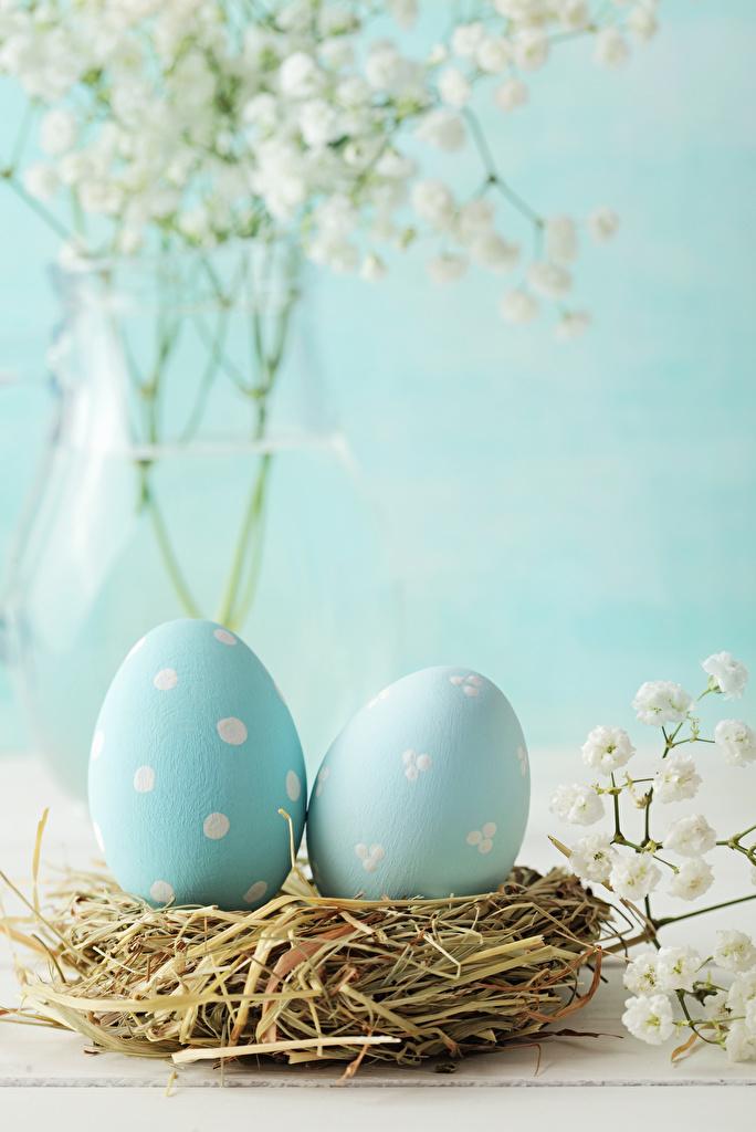 Фото Пасха Яйца Гнездо вдвоем голубых Еда Солома  для мобильного телефона яиц яйцо яйцами 2 два две Двое гнезда гнезде голубая голубые Голубой Пища соломе Продукты питания